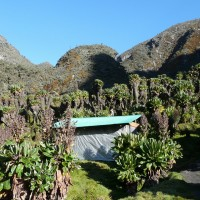 Huts of the Rwenzori